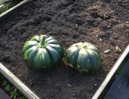 Selbstgezüchtetes Gemüse von Birgit